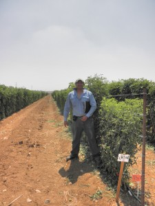 Current PhD student Carlos Arbizu working on tomato research.